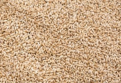 birdfood Canary seeds
